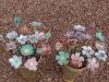 dsc01518-jpg-fleurs