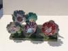 dsc01543-jpg-fleurs-chaslin